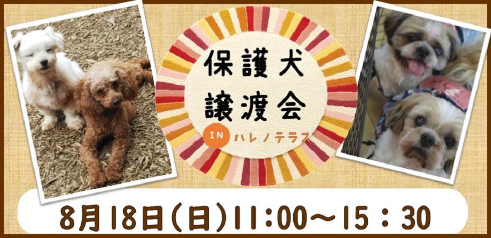 【犬】保護犬譲渡会inハレノテラス
