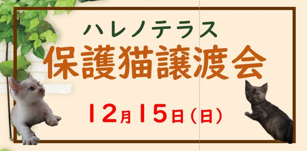 【猫】保護猫譲渡会inハレノテラス &プチハンドメイドマルシェ